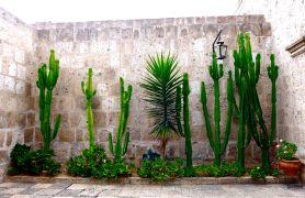 30 arequipa claustros cacti