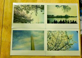 61 cherry blossom polaroids